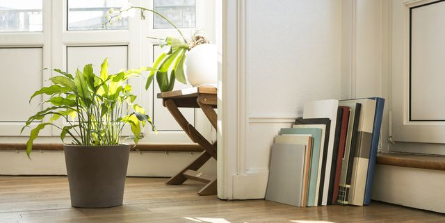 how-to-protect-your-floors-from-indoor-plants